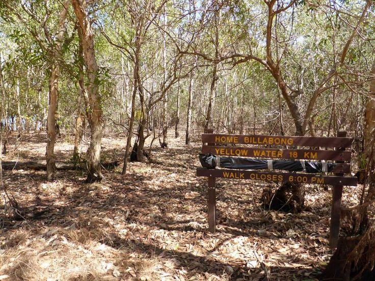I took a big stick on the Cooinda Wetlands Walk near Cooinda Lodge, Kakadu NT. Now on RvTrips. See more at: www.rvtrips.com.au/nt/cooinda-lodge-kakadu/cooinda-wetlands-walk/