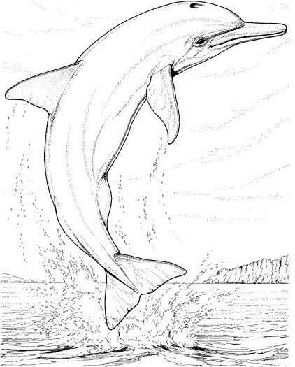 realistic dolphin coloring pages for adults enjoy coloring adult coloring pages pinterest