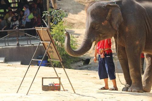 Ho sempre desiderato di avere un elefante che mi dipinge immagini. Sembrano grandi animali domestici! --Carson