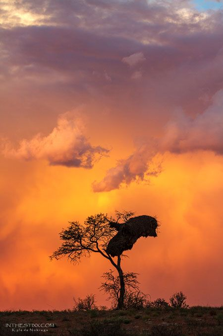 A classic Kalahari scene. BelAfrique your personal travel planner - www.BelAfrique.com