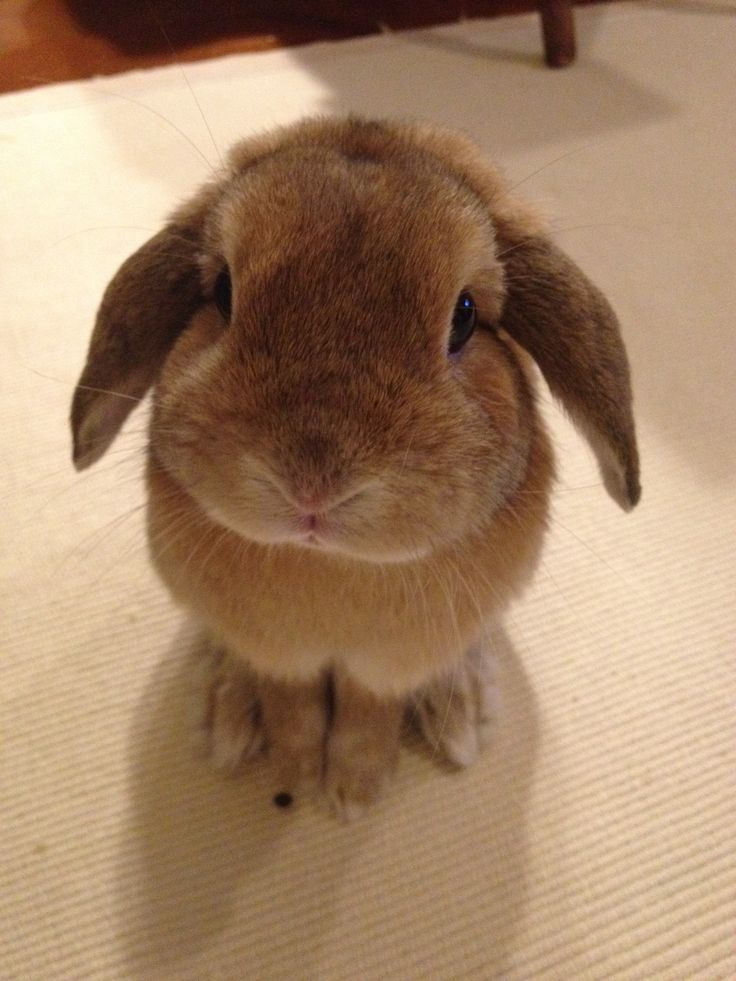 Hey, I am here! Love you ♡