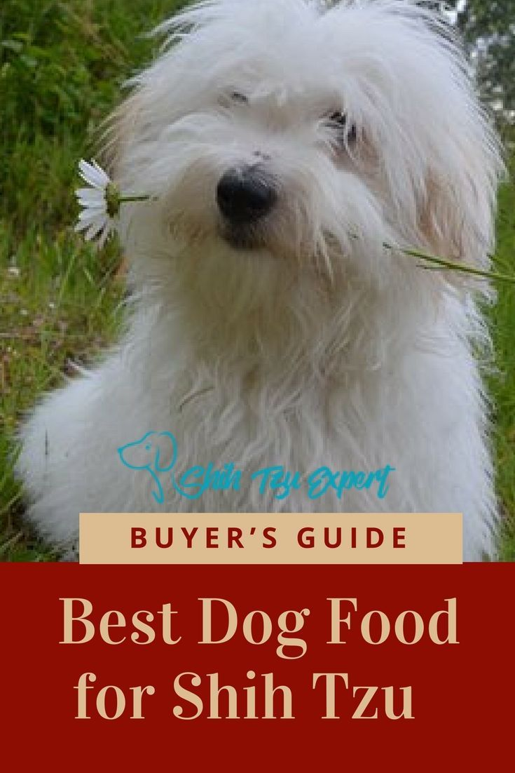 Best Dog Food For Shih Tzu 2018 Buyer S Guide The Best Of Shih