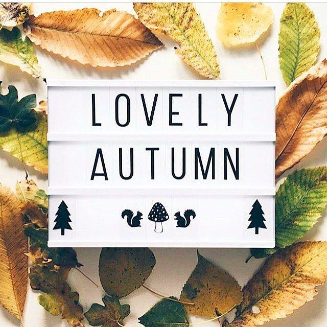 Lightboxes online & instore! We're Open 10-6pm today! by @hanne_dem #Autumn #Lightbox #Lightboxes #LovelyAutumn #LittleLovelyLightbox #AutumnLeaves #PartyDecor #NurseryDecor #MossCottage #LovelyThingsInside #Dundrum #DublinShops