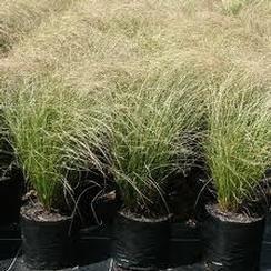 Taupo Native Plant Nursery