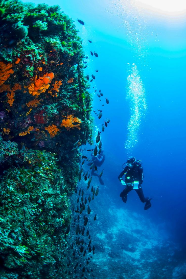 The most verdant Greek island of Skopelos hosts some of the most interesting scuba diving spots