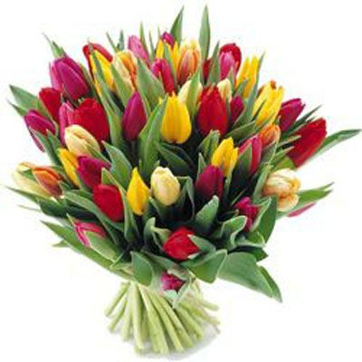 20 Stems of mixed #tulips from Auckland Flowers - my grandmother's favourite flowers.