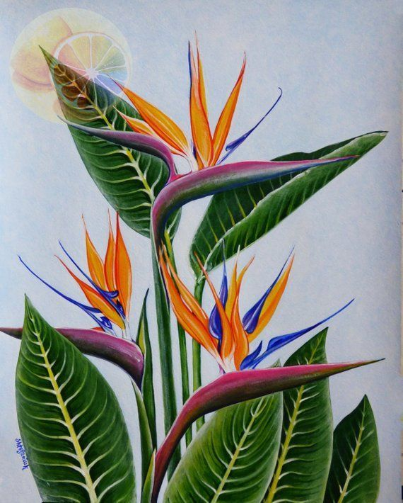 Bird Of Paradise Strelitzia 14 X11 Tropical Plant Hawaiian Flower Acrylic On Watercolo In 2020 Paradise Painting Birds Of Paradise Plant Birds Of Paradise Flower