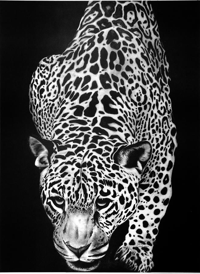 Leopard Drawing by Jerry Winick