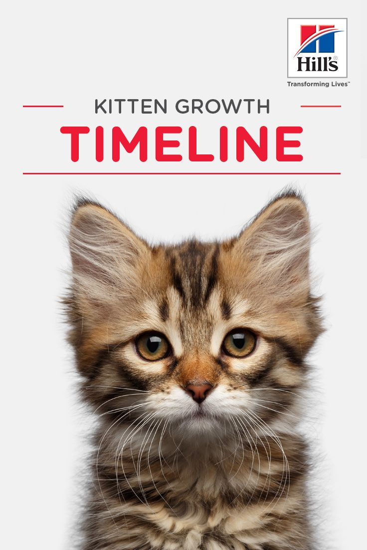 Weekly Kitten Development Timeline Kitten Growth Chart Kittens Cat Parenting