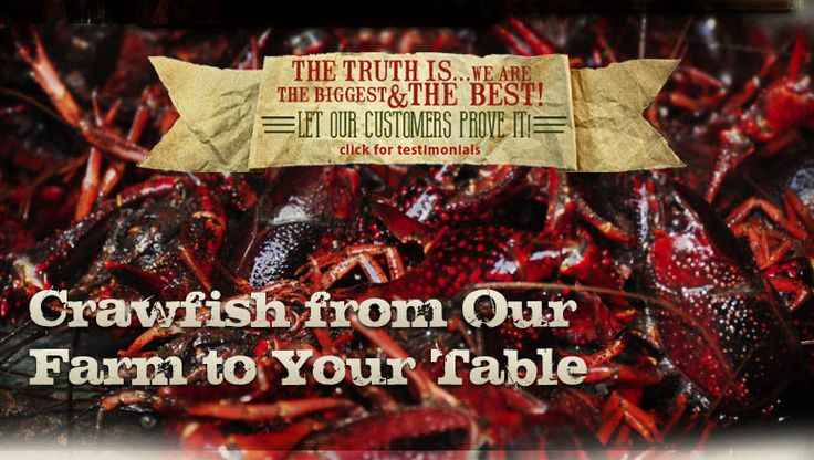 Louisiana Crawfish Co. | Browse Our Live Crawfish