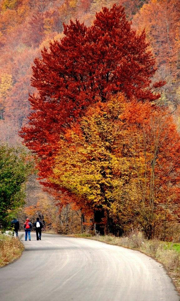 Autumn in the Romanian mountains.