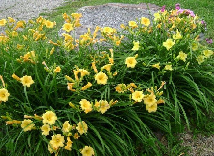 313 best Gartengestaltung u2013 Garten und Landschaftsbau - Gartenbau
