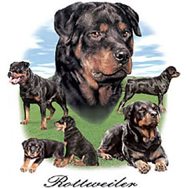 colorful pictures of rotties | Vom Vollenhaus Rottweilers - German Bred Rottweiler Breeder Offering ...