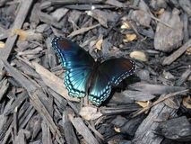 Red-spotted Purple Butterflies - Download From Over 39 Million High Quality Stock Photos, Images, Vectors. Sign up for FREE today. Image: 1704127