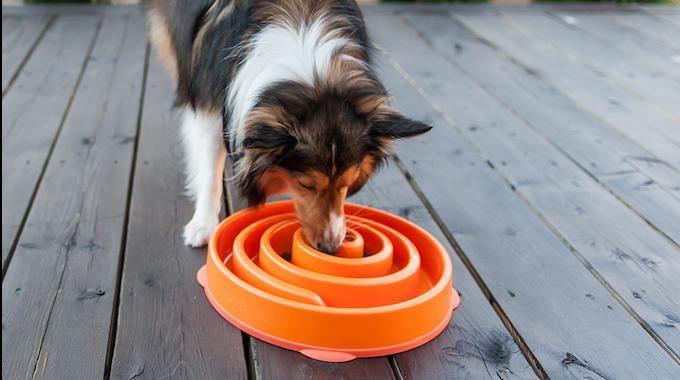 Votre chien se jette sur la nourriture ? La solution est d'utiliser une gamelle anti-glouton qui oblige votre chien à manger doucement. :-)  Découvrez l'astuce ici : http://www.comment-economiser.fr/gamelle-qui-oblige-votre-chien-a-manger-doucement.html?utm_content=buffer8018a&utm_medium=social&utm_source=pinterest.com&utm_campaign=buffer