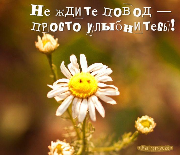картинки цветы с цитатами хорошего настроения такое действо нужно