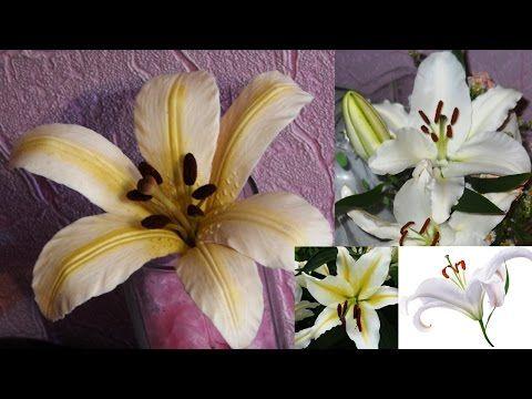 Лилия из холодного фарфора \ Lily of cold porcelain