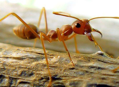 fotografias_macro_insectos
