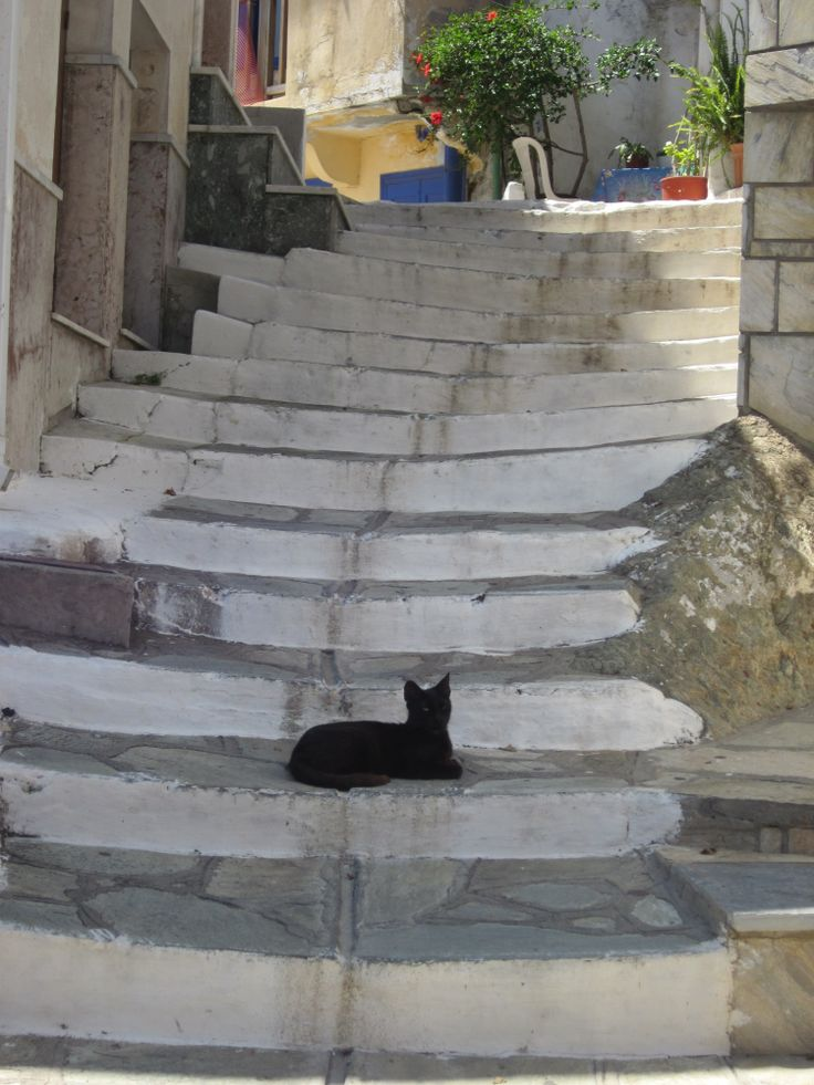 Black beauty resting on the stairs