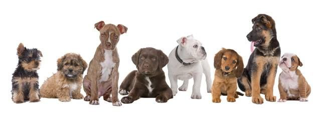 Scopri le Puppy Class per l'educazione del tuo cucciolo http://www.clinicaveterinariacmv.it/news-puppy-class.html