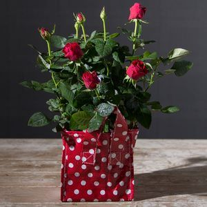iflorist - Christmas Flowers