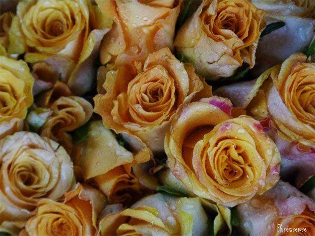 Bloemfontein (Mangaung) Rose Festival 2013 (c) Florescence