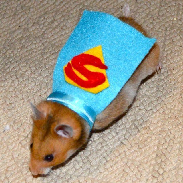 Hamster costume. Superman cape. Custom pet Halloween costumes by la Marmota Café.. $9.00, via Etsy.