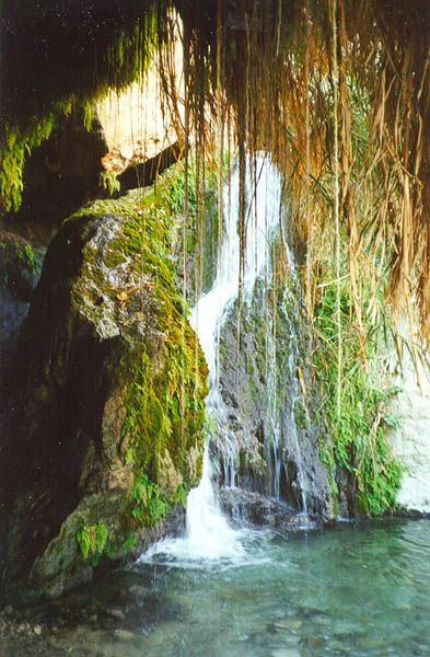 Oasis at Ein Gedi, Israel  This is where King David would go to hide an spend time with God