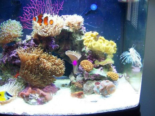 Photos of both small and large reef tanks aquarium setup for Community saltwater fish