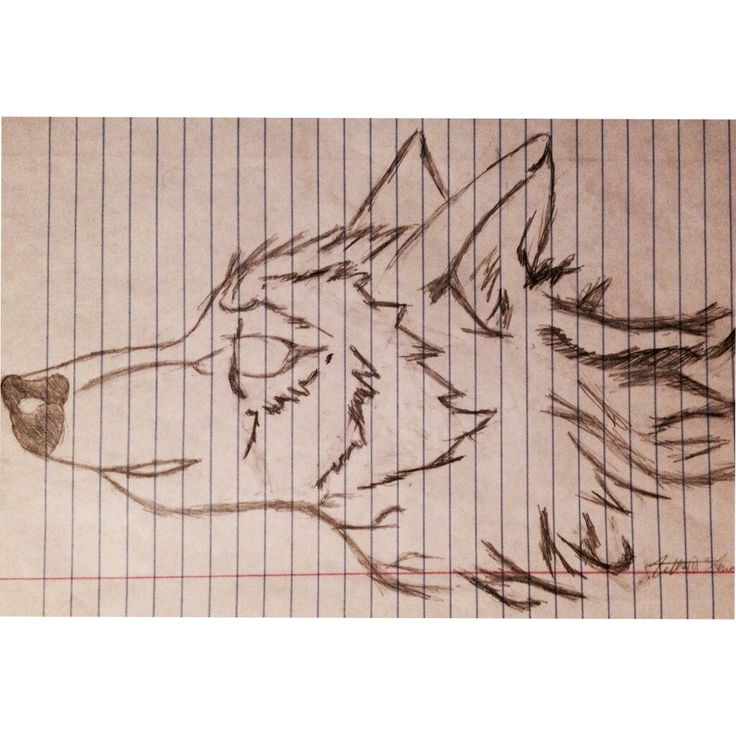 Wolf head drawing.
