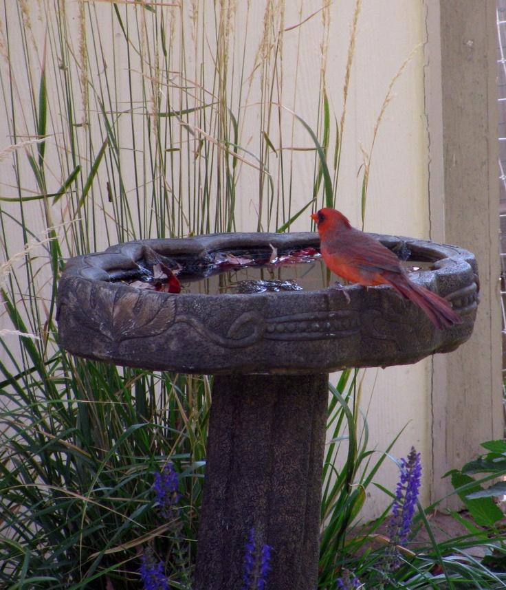 1000 Images About Birdbath Ideas On Pinterest Bird