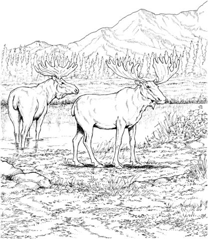Two Moose Deers Coloring Page From Category Select 24848 Printable Crafts Of Cartoons Nature Animals Bible And Many More