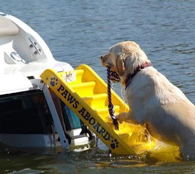 Dog boat ladder, great this summer! #DogBoatLadder #DogWaterSafety #CoolDogProducts #DogProducts #Dogs #Pets