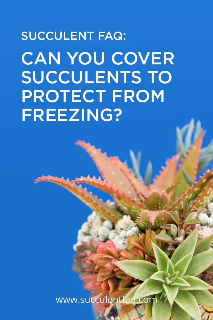 Can You Cover Your Succulents To Protect From Freezing