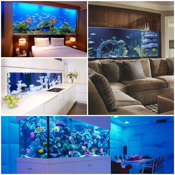 Frisch The 25+ best Aquarium fische ideas on Pinterest | Aquarium fische  TH59