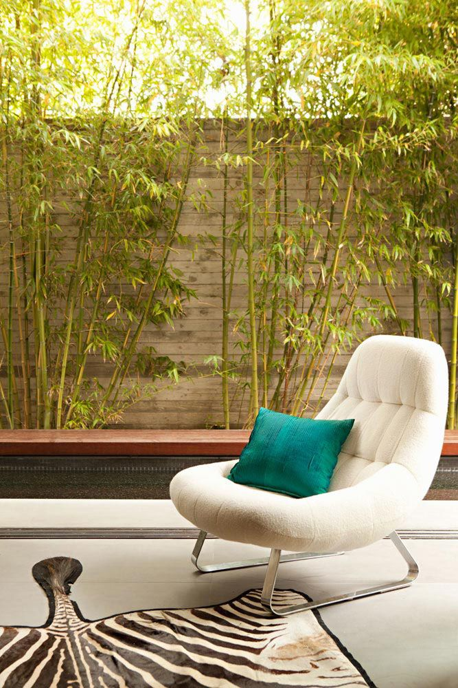 ignore the furniture- bamboo around the wall - courtyard