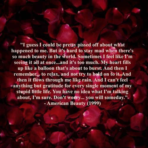 I fell in love with this quote the moment I heard it and if you haven't watched American beauty I highly recommend you do it's awesome :)