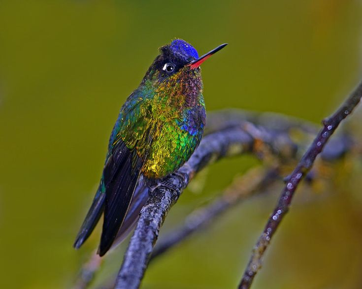 Best Hummingbird Wings Ideas On Pinterest Hummingbird - Photographer captures amazing close up photos of hummingbirds iridescent feathers