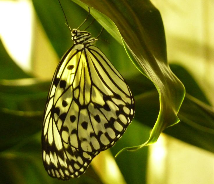 I love butterflies. Captured this Butterfly, Washington DC Museum of Natural History. Photo, Tania Cavaiuolo