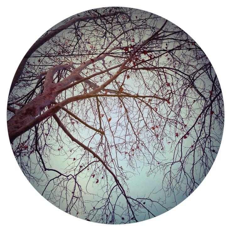 Branches | By Josie Attley 2015 www.instagram.com/josieattley