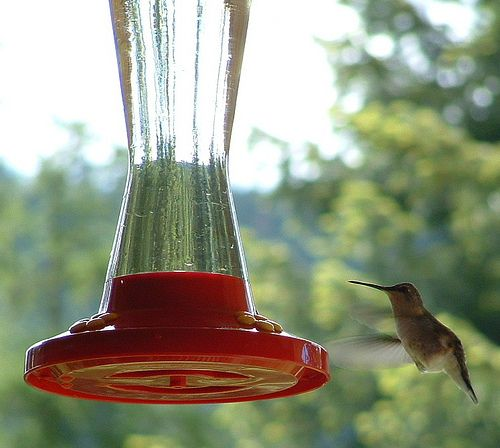 Homemade hummingbird nectar. I've been doing this for years and I never add food coloring. Experts say it could be harmful to the birds.