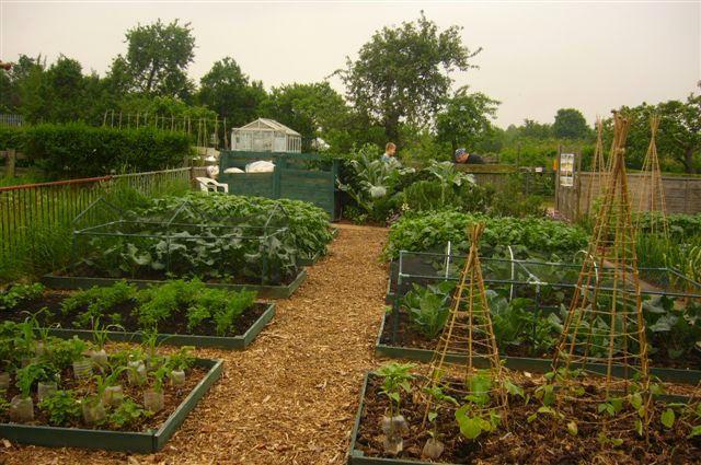 more potager love #garden #edible_gardening #potager: Allotment Ideas, Potager Garden, Garden Design, Edible Gardens, Cottage Gardens, Edible Gardening Potager, Allotment Hints