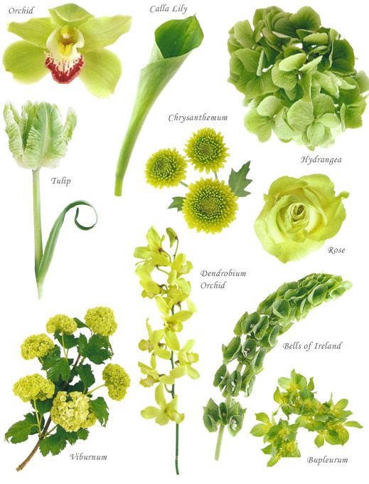I've always wondered... green flowers. amazing flower website. at least you can get an idea of flowers you want.