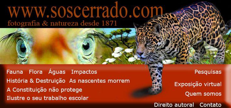 Site dedicado a valorizar o bioma cerrado com o poder das imagens.