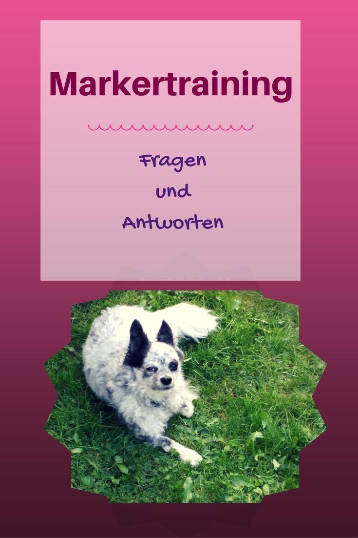 Seit etwa 2 Jahren setze ich bei meinen Hunden Clicker und Markerwort im Training ein. In meinem heutigen Blogartikel gebe ich dir einen kurzen Einstieg und beantworte die wichtigsten Fragen zu dieser Trainingsart.