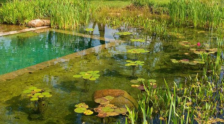 All About Natural Swimming Ponds and Pools. # ...