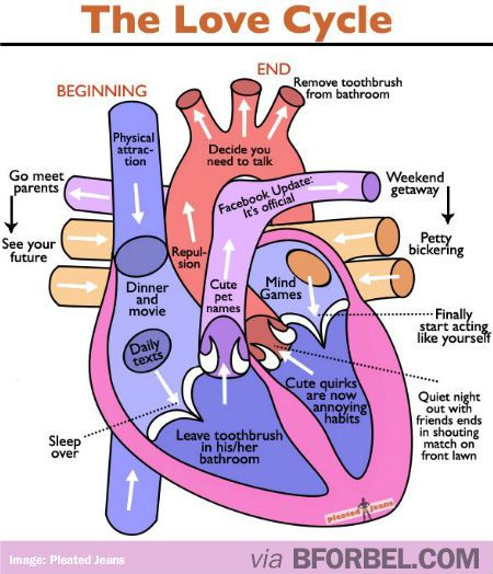 fetal pig diagram with labels 3 way lighting switch wiring the love cycle, from beginning to all over again…   relationships pinterest cycling