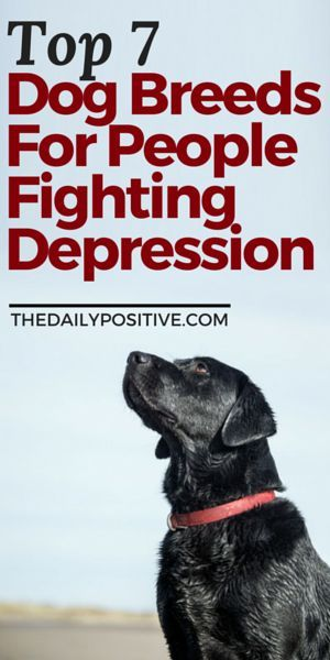 The key to choosing a dog to help overcome depression is quite different than choosing one for general needs. Youll want to find a breed which is playful yet not overly energetic, loving and not independent, low maintenance, and somewhat portable. Here a