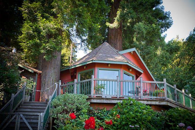 Redwood Tree House: Sonoma, California