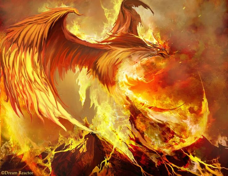 In flames en llamas ave f nix phoenix bird phoenix art fantasy art y fantasy creatures - Fenix bird hd images ...